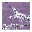 Blossom in Lilac (05074)