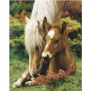 Mare and Foal II (06817)