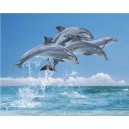 Four Dolphins (06891)